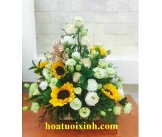 Hoa chúc mừng đẹp - HT04